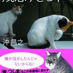 超人気猫写真家・沖昌之の最新写真集は『残念すぎるネコ』。ネコの数だけ残念がある🐈