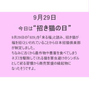 9月29日は【招き猫の日】!!