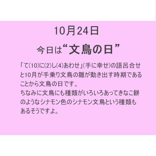 """10月24日は""""文鳥""""の日!!"""