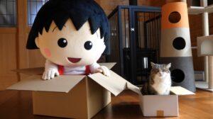 YouTube史上、最も多く視聴されたネコ「まる」と「ちびまる子ちゃん」のコラボ動画公開!