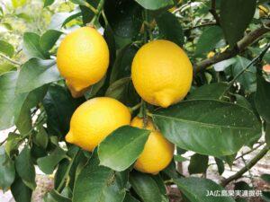 Touch food VOL.9 レモン