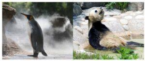 バテるのは人間だけじゃない! 可愛い動物たちの『きょうもバテてます』が本日発売