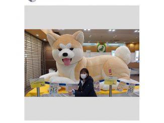 林美桜アナウンサー、八王子駅の巨大な秋田犬とご対面「ふわふわで大きかったです」